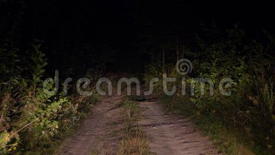 Entraînement sur la mauvaise route rurale au crépuscule à la lumière des phares dans Bush banque de vidéos