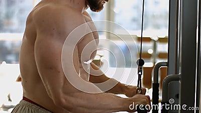Entrenamiento del Bodybuilder en gimnasia almacen de video