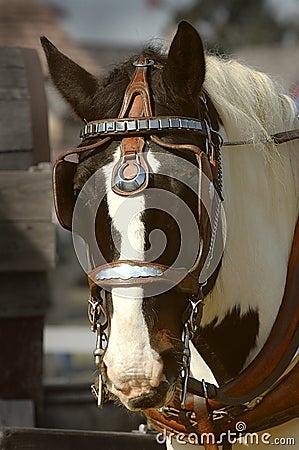 Entwurfs-Pferd