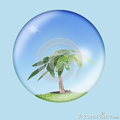 Environmental Conservation 1