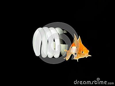 Environmental Friendly Light Bulb