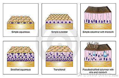 Epitheliaale types