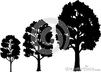 Eps wzrostu etapach drzewa