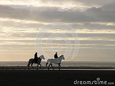 equestrian dusk