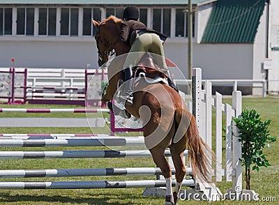 Equestrian showjumping horse