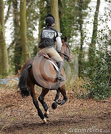 Equestrian sport,galloping horse