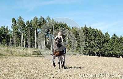 Equestrienne e cavalo. Hanoverian.