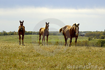 Equine Family on Hill
