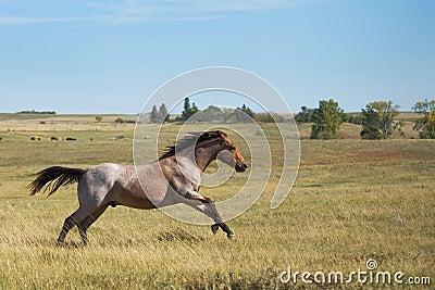 Equine Spirit horse