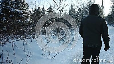 Equipaggi camminando in Forest Alone During l'inverno nel lotto di neve stock footage