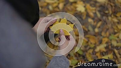 Equipe guardar a folha amarela bonita em suas mãos, pensando aproximadamente perto, nostalgia filme