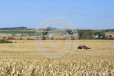 Equipment shed in a corn field.