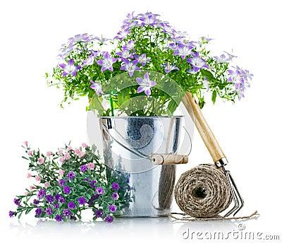 Equipo de jardín con las flores violetas
