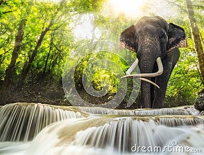 Erawan Waterfall with an elefhant