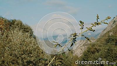 Erba contro una montagna stock footage