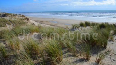 Erba della spiaggia, delle dune con i cumuli e cielo blu video d archivio