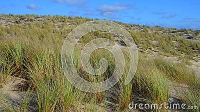 Erba della spiaggia, delle dune con i cumuli e cielo blu stock footage