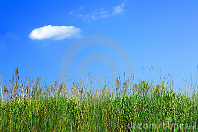 Erba di prato e un cielo blu