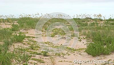 Erba ed edera nelle dune