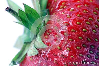 Erdbeere. Makro