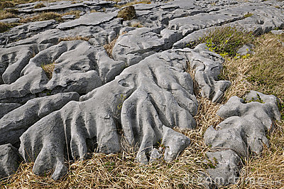 Eroded Water Washed Limestone