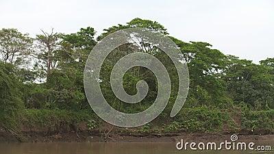 Erosione della sponda del fiume ed interrare, Casanare, Colombia video d archivio