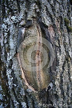 Erotic forest
