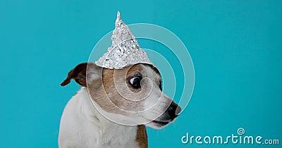 Erschrockener Hund in einem Folienhut
