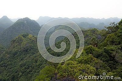 Erstaunliche Ansicht über einen Wald
