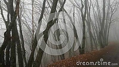 Erste Person-Sicht Ein vorsichtiger Spaziergang durch den unstistististigen Wald Die Kurven der Baumstämme wie die Schatten stehe stock video footage