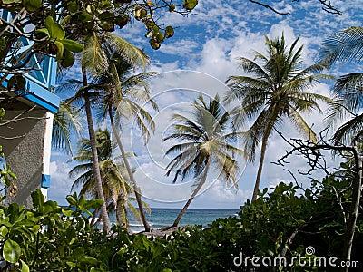 Erster Blick auf Palmen-Paradies