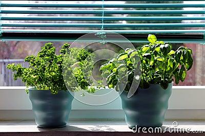 Ervas frescas (manjericão e salsa)