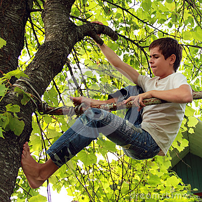 Escale uma árvore