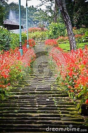 Escaleras del jard n con las flores for Escaleras para caminar fuera del jardin
