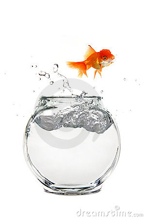 Escaping Goldfish