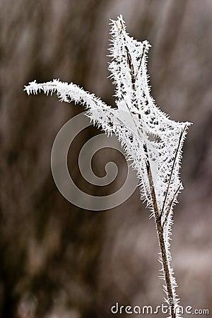 Escarcha o escarcha suave en las plantas en un día de invierno