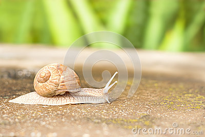 Escargot de mouvement