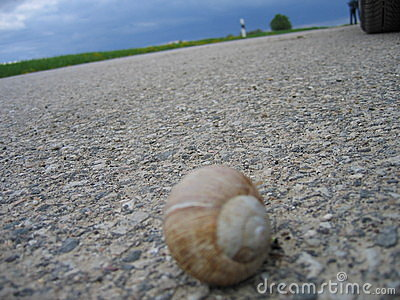 Escargot sur la route