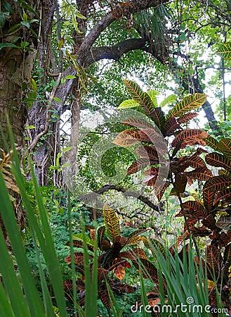 Escena tropical idílica