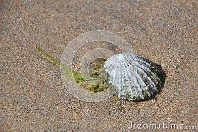 Escudo na areia da praia