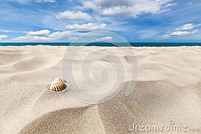 Escudos em uma praia