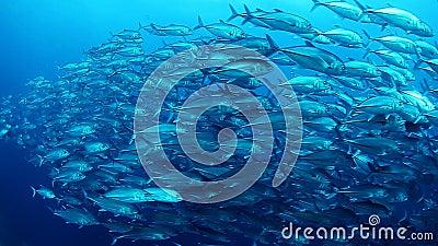 Escuela de los pescados del enchufe