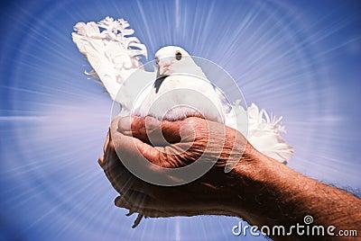 Espírito Santo da pomba