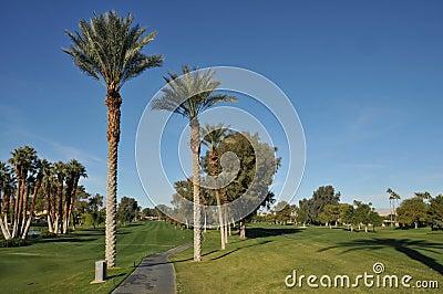 Espacio abierto del golf con el camino y las palmeras del carro