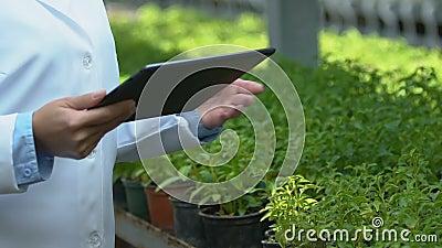 Especialista en biología femenina que examina plantas de efecto invernadero mecanografiando información tabletas almacen de metraje de vídeo