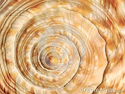 Espiral en shell del mar