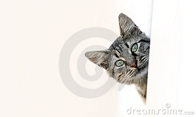 Espreitar do gato