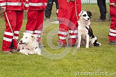 Esquadrão do cão do salvamento