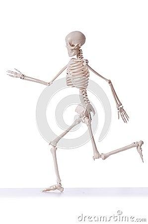 Esqueleto aislado