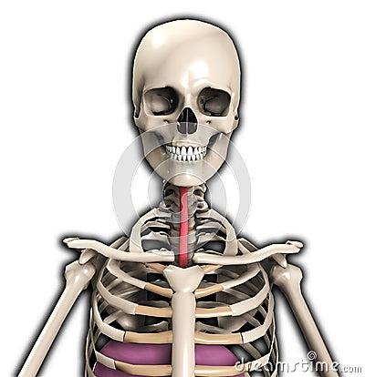 Esqueleto com tubulação do vento